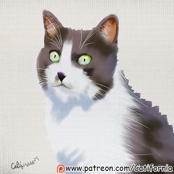 Caturday Portrait (June 2nd Edition) by Catifornia