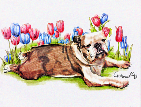 Watercolor Puppy Portrait for Our Bulldog friend