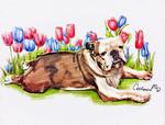 Watercolor Puppy Portrait for Our Bulldog friend