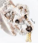 Watercolor Puppy Portrait for a friend's cute Dog