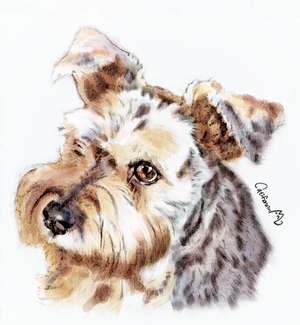 Watercolor Puppy Portrait for Our Schnauzer friend