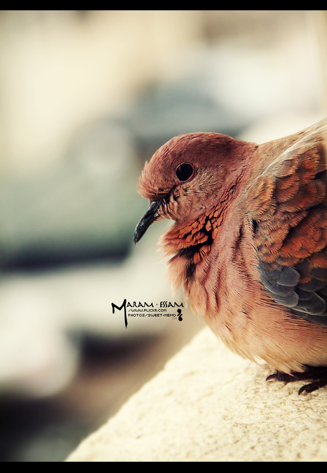 - lonely bird ,, by maram-essam-k