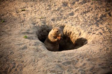 little prairie dog I by B13Laito