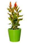 Green plant with red flowers in PNG file