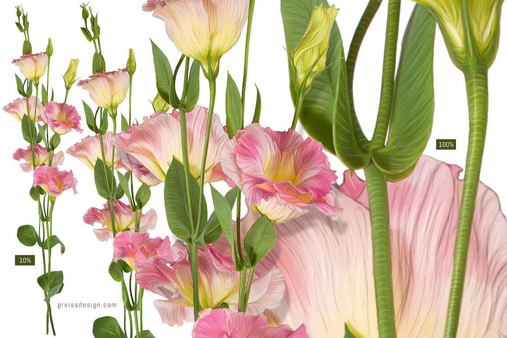 Lisianthus flower drawing by greissdesign on deviantart for Lisianthus art floral