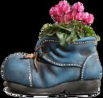Cyclamens inside blue shoe