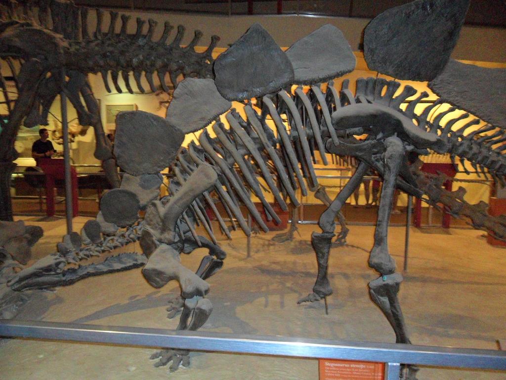 http://img08.deviantart.net/9799/i/2015/121/3/4/stegosaurus_stenops_by_rattlerjones-d8rtjxt.jpg