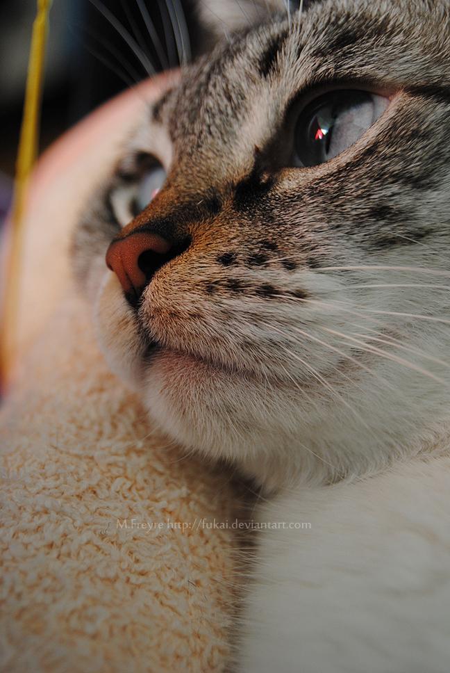 PHOTOGRAPHY- Dreaming awake by Fukai