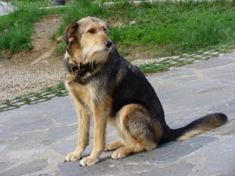 Dog by Odino87