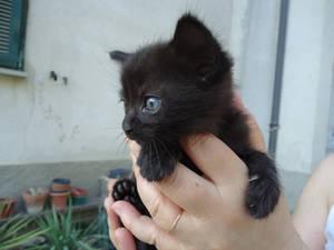 New born kitty! Hello World!