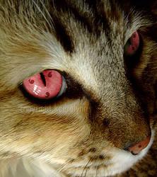 Cat Sharingan by MaFiOs