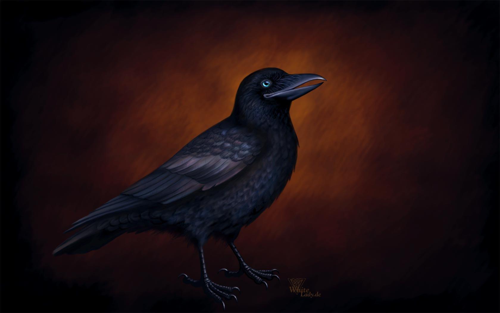 crow wallpaper by ladameblanche on deviantart