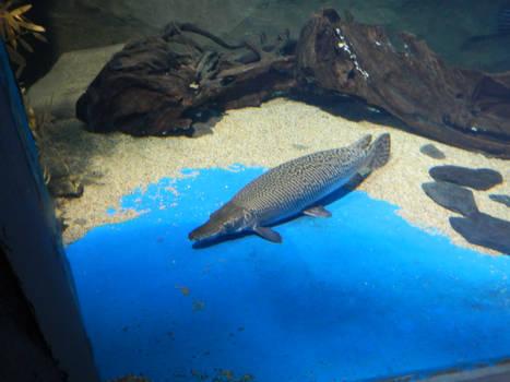 Underwater Fish 04