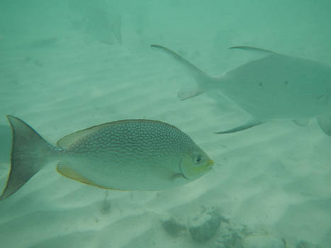 Underwater Fish 02