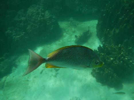 Underwater Fish 03