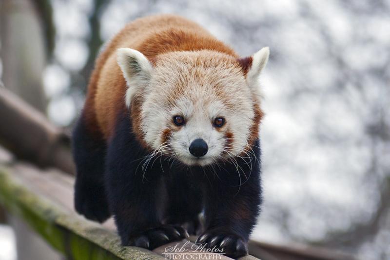 Cutest animal ever by Seb-Photos