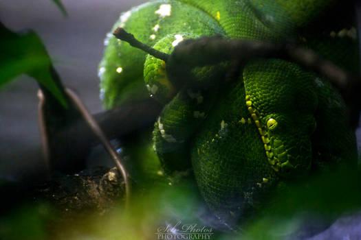 The green eye of fear...
