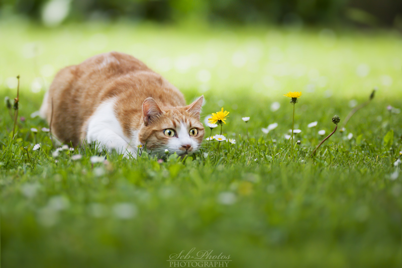 I guess I saw a mouse... Mickey, come here! by Seb-Photos