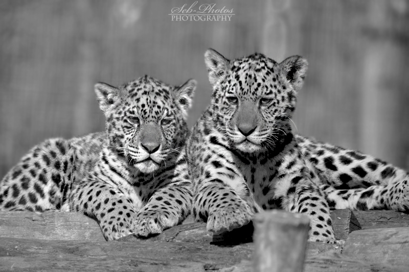 Sibling love... by Seb-Photos