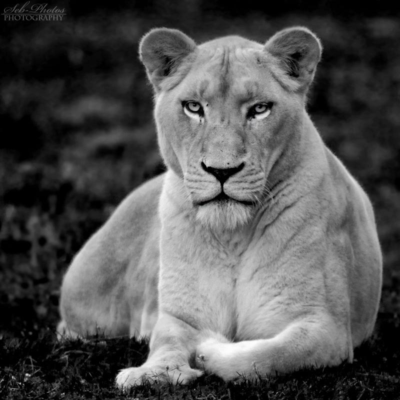 White on Black by Seb-Photos