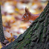 Peek-A-Boo by Seb-Photos