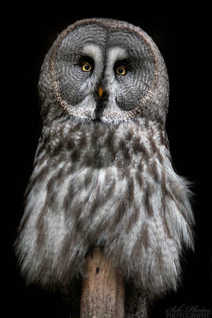 Piercing eyes... by Seb-Photos