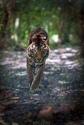 Danger in approach...