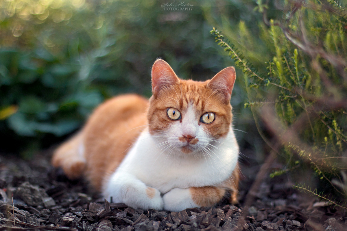 Redhead cutie! by Seb-Photos