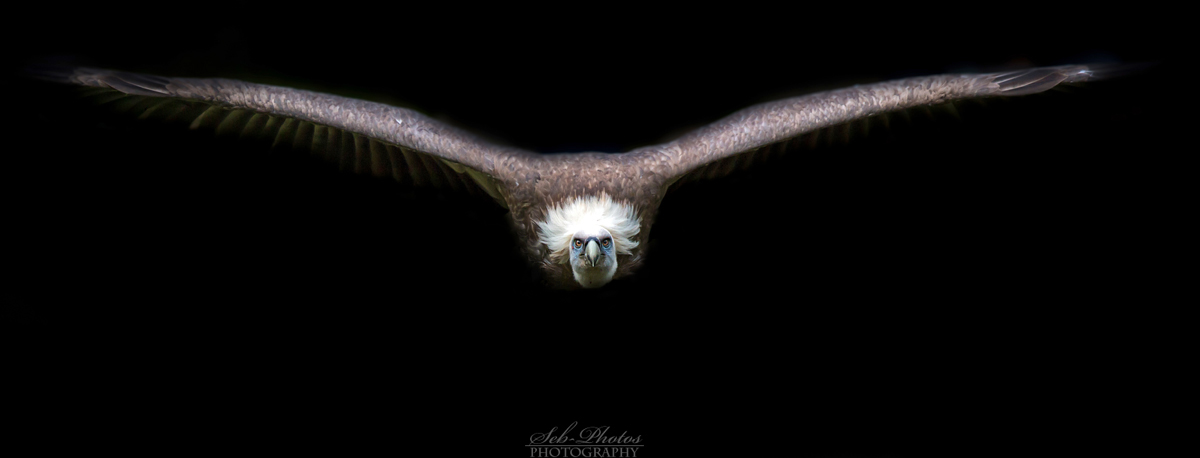 Emerging from the dark... by Seb-Photos