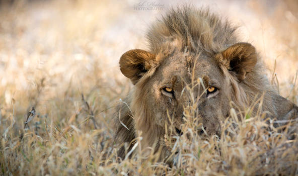 Botswana 2015 - Lurking in Kalahari...