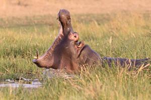 Botswana 2015 - Intimidation
