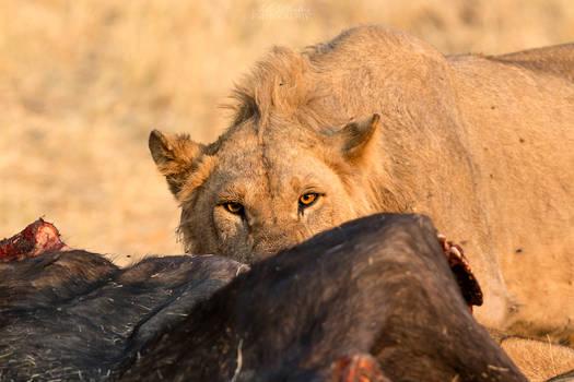Botswana 2015 - Feeling like the next prey