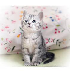 cat by grezelle