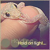 Hold On Tight - Gecko Icon by ThatDeadGirl