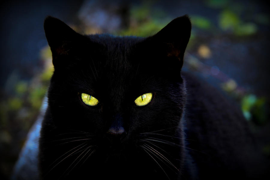 Black Cat Images Stock Pictures Royalty Free Black Cat