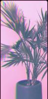 plantwave by T-E-R-R-I-F-I-E-D