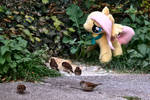 Birdshy