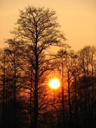 sun by ciabox