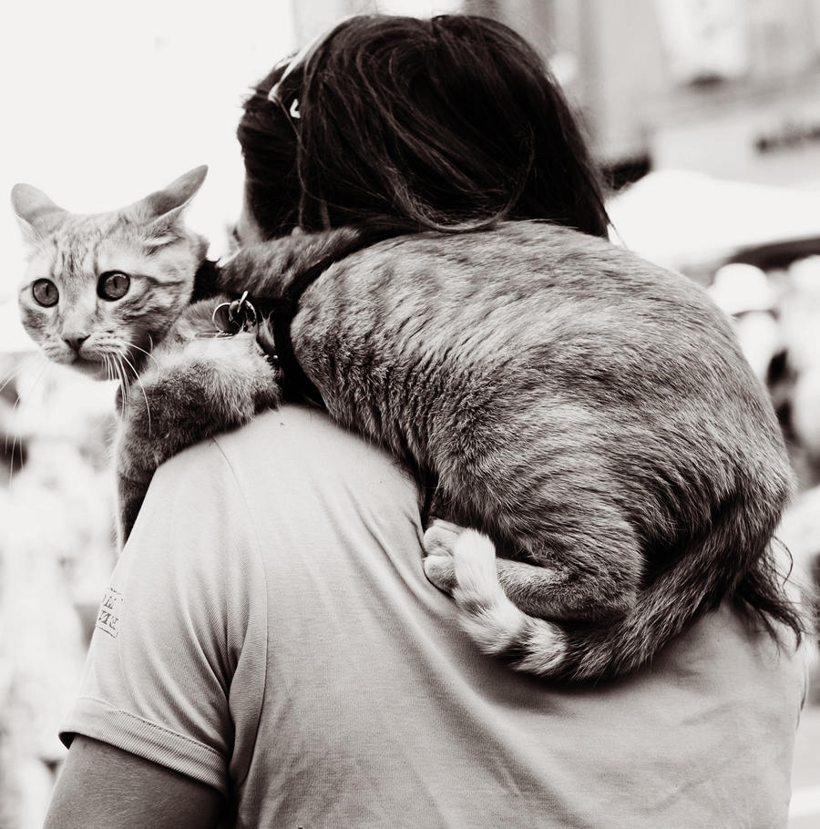 Cat by cuae
