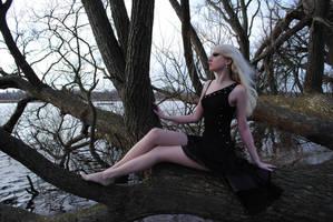 Black Fairy Stock