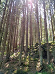 Mountain Forest Stock