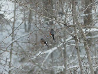 Birds. by Makkex