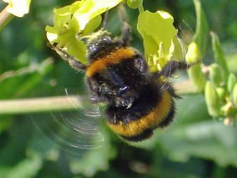 buzzin by jeannie64