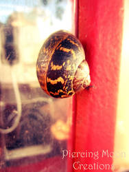 Snail on the Telephone