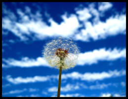 Summer Breezes by FramedByNature