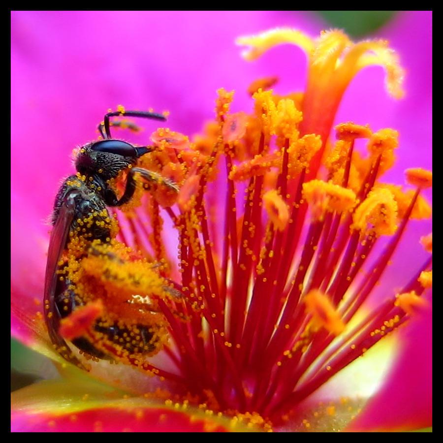 Bathing in Pollen by FramedByNature