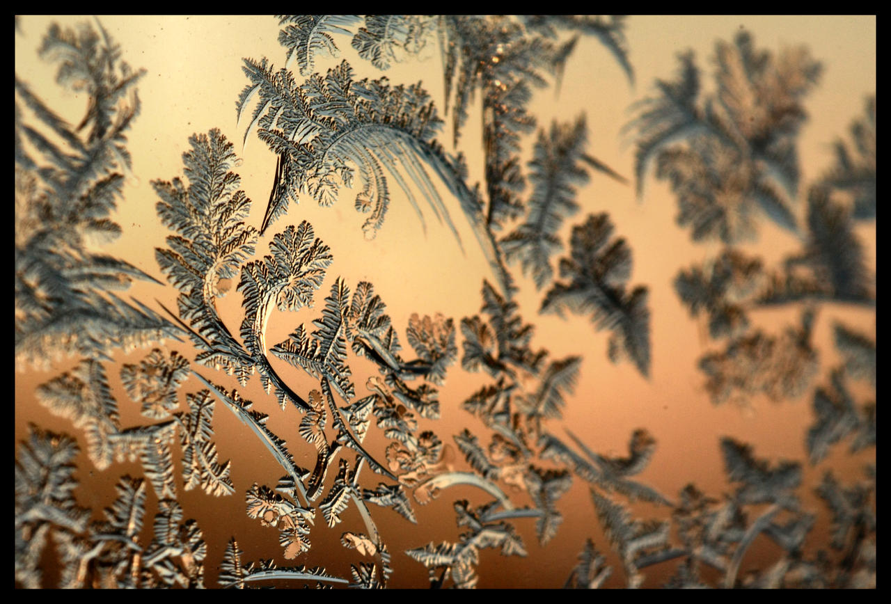 Warm December Frost by FramedByNature