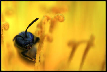 Bee Portraiture II by FramedByNature