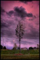 Softly Stormy by FramedByNature