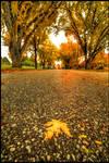 Autumn in Boys Town II